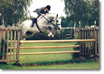 Showjumping- Click to Zoom